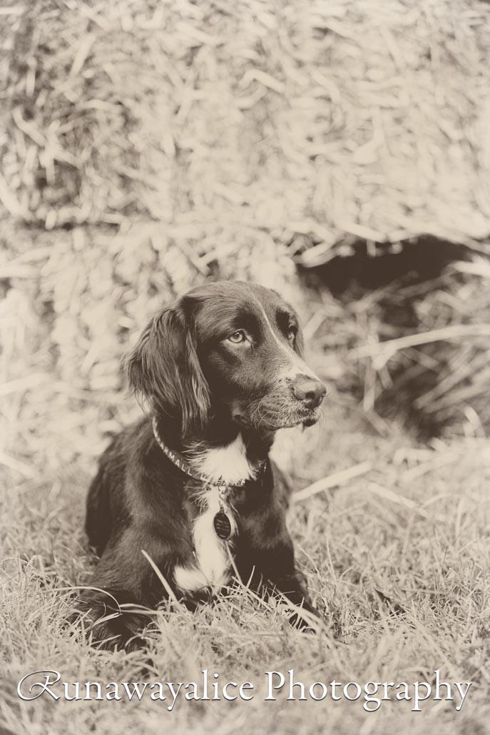 browndogheartland